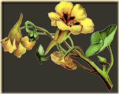Vintage_flower_01