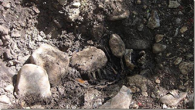 localisan cuerpo enterrado y en estado de putrefaccion nen pueblo viejo de iguala (2)