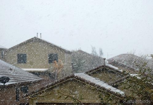 3. front yard snow-kab