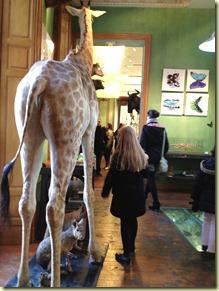 deyrolle giraffe
