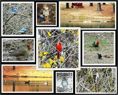 Birds all 2