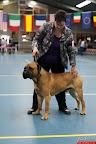 20130511-BMCN-Bullmastiff-Championship-Clubmatch-1707.jpg