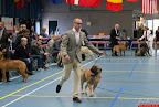 20130510-Bullmastiff-Worldcup-0427.jpg