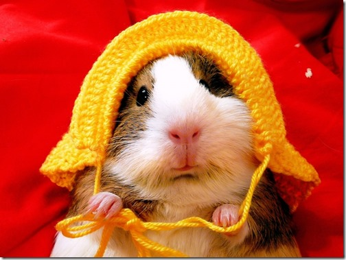 hamster grande imagen (6)