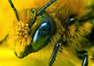 Amazing Pictures of Animals, Photo, Nature, Incredibel, Funny, Zoo, Bee, Insetcs, Anthophila, Alex (1)