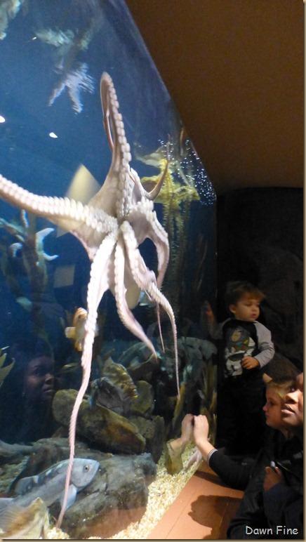 Atlanta Aquarium_169