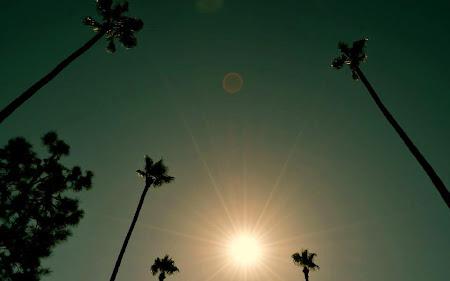 Imagini Los Angeles: Si asa cum spuneam - avem palmieri si brazi