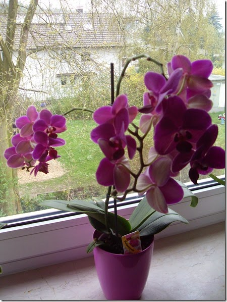 20144 Orchideen (4)