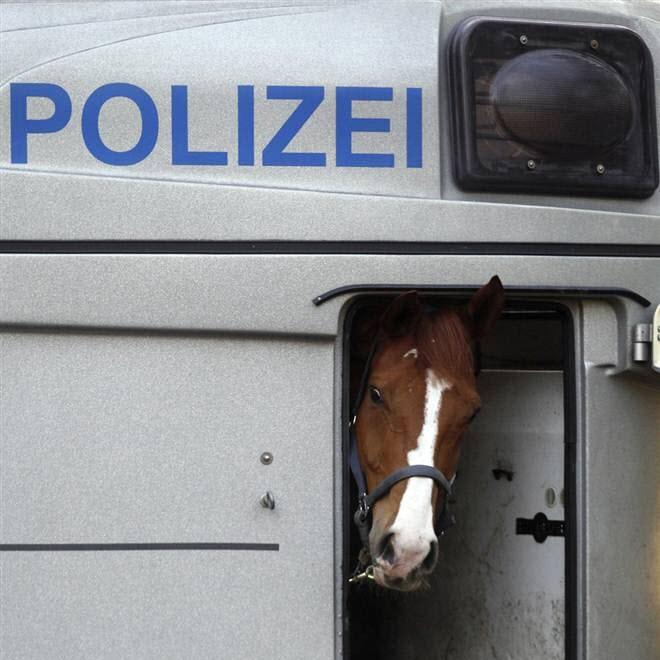 Замели лошадку полицаи!