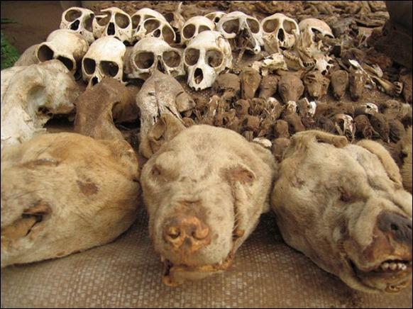 World's Largest Voodoo Market - Togo Akodessewa 03