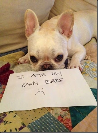 bad_dogs_publicly_shamed_640_high_17