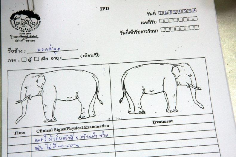 elephant-hospital-15