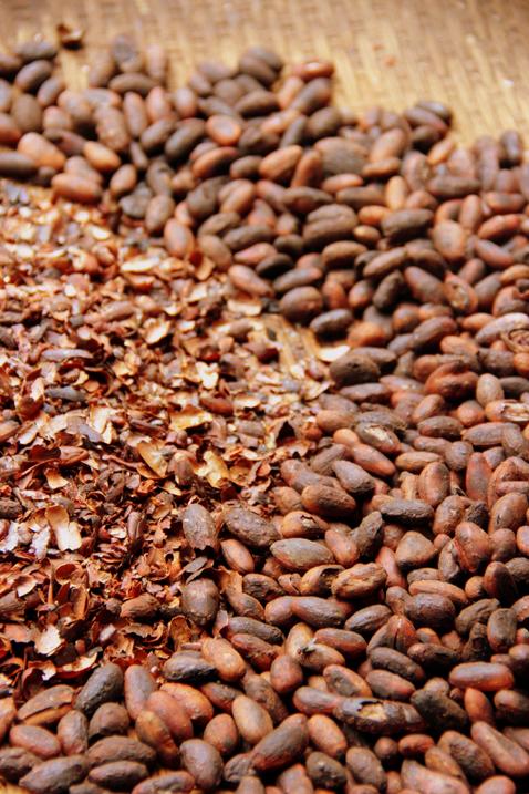 krossa kakaobönor