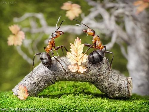 formigas inacreditaveis incriveis desbaratinando  (66)