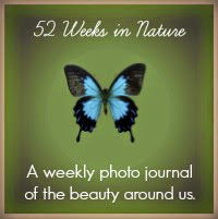52 Weeks in Nature 2000