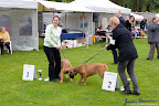 20100513-Bullmastiff-Clubmatch_30862.jpg