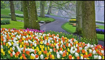 Tulip bed and trees in morning mist, Kuekenhof Gardens, Netherlands