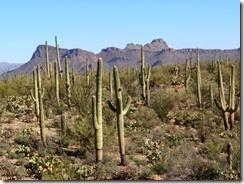 Hike 3 Saguaro West 061