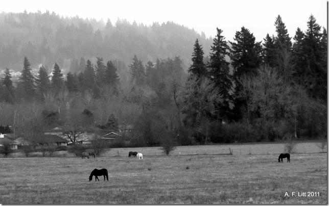 Gresham Butte (background).  Gresham, Oregon.  December 18, 2011.  Test photos with new camera.