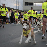 Pet Express Doggie Run 2012 Philippines. Jpg (28).JPG