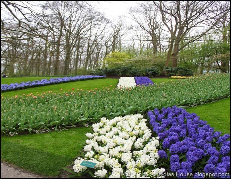 Keukenhof Gardens 21