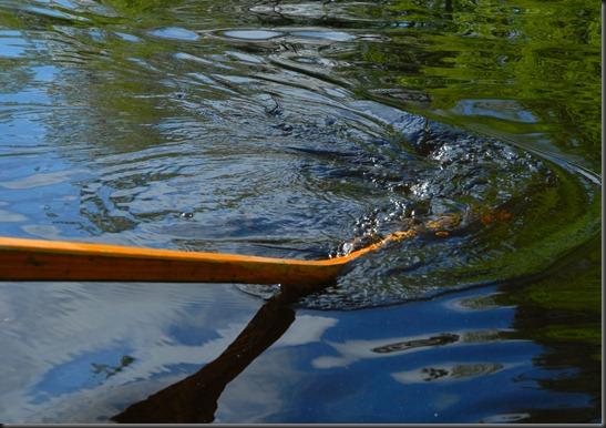 haukijärvi sudenkorento 017