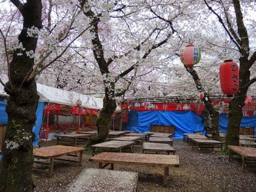 平野神社花見茶屋ひさご