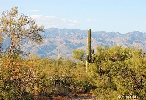 1. Saguaro NP east-kab