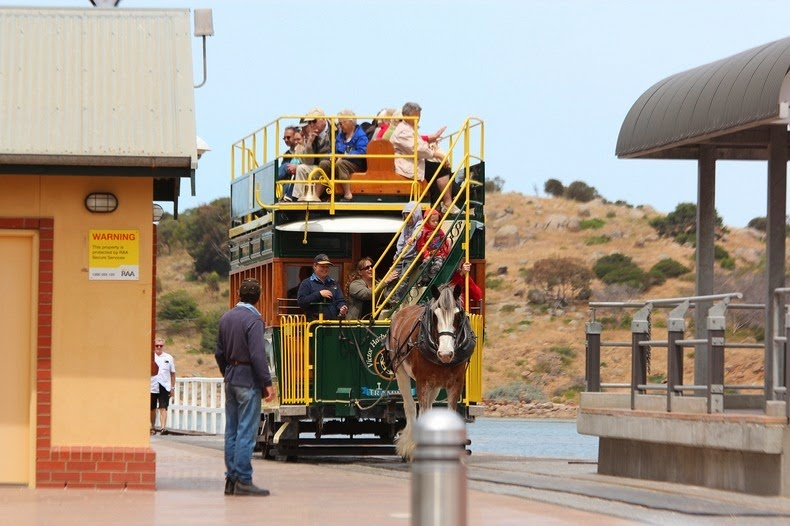 victor-harbor-horse-trams-8