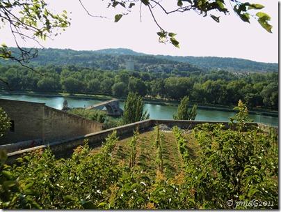 Avignon 2011 Le Pont