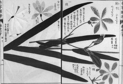 檜扇 本草図譜