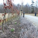 Lavendelen er trimmet, vintergækkenstår flot og tulipanerne er på vej op.