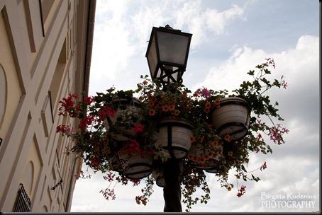 budapest_20120604_flowers