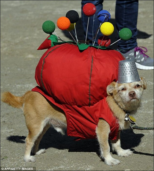 A dog looks strained while posing as a pin cushion the 21st Annual Tompkins Square Halloween Dog Parade