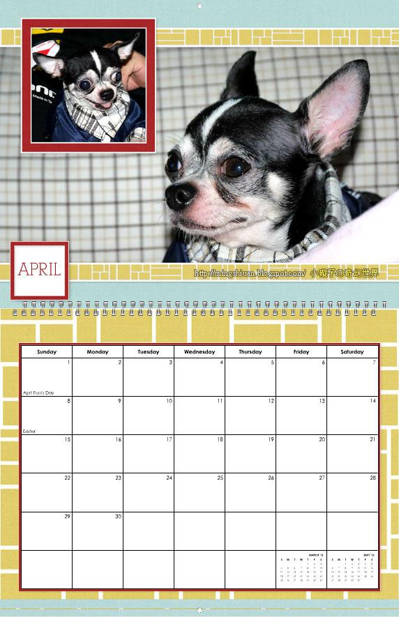 2012年 吉娃娃-哈利 寫真月曆