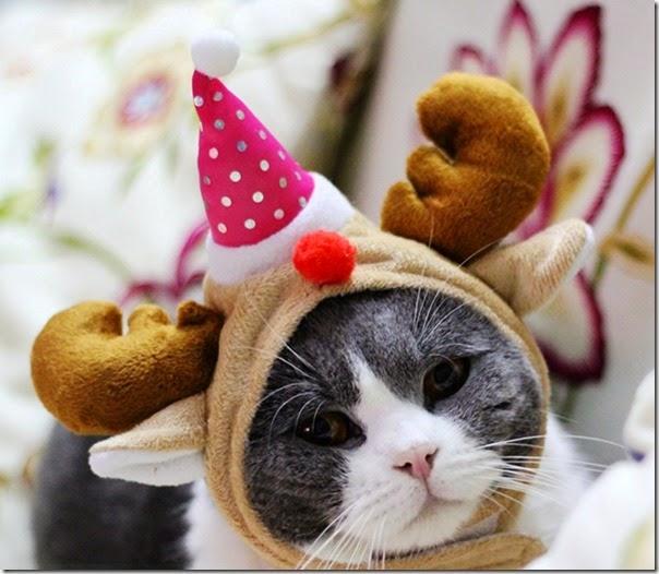 得意貓咪聖誕帽_1