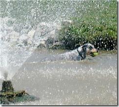a - bandido swimming dog park