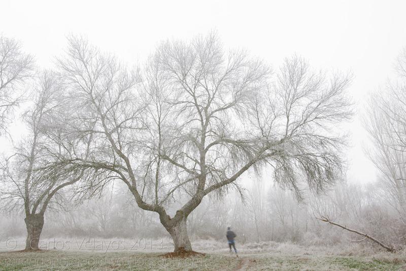 Corredor en la Neblina