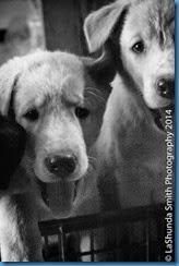 pups-4