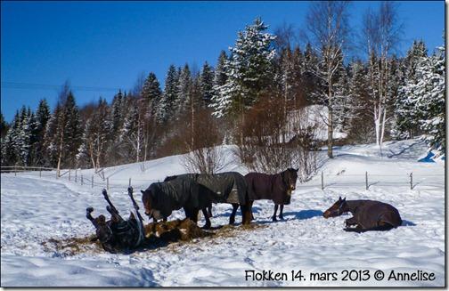 2013mar-flokken_01