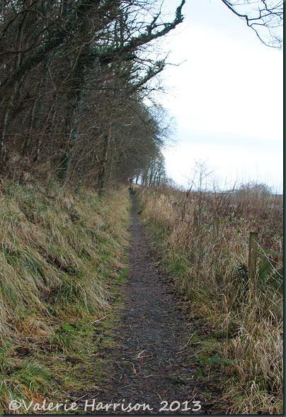11-path