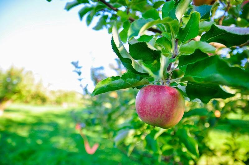 Chapin orchard-8862
