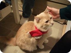 Enoch's cat