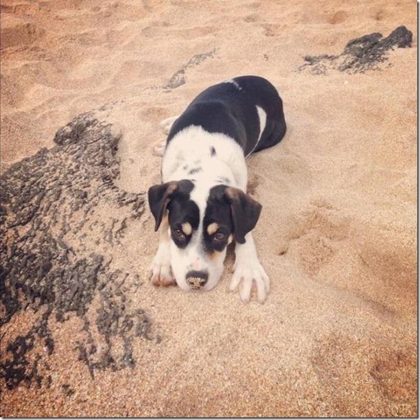 cute-puppies-awww-25