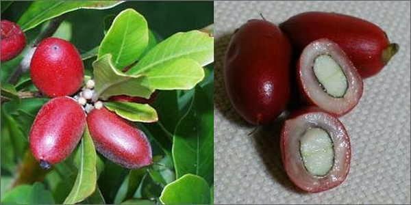 5- fruta-milagrosa