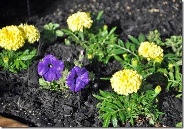 Spring Flower Bed 3