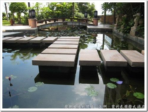 深圳寶利來國際大酒店,在A、B棟相連的地方還有一個水廊小花園,有空閒不敢到外面走走時,來這裡散散心看看荷花,應該也不錯。
