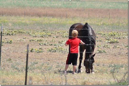06-11-13 Zane and horses 04