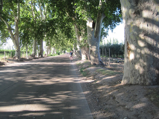 Cycling down the wine route.