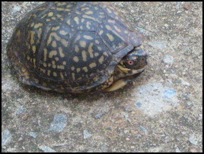 turtle 3_thumb[2]